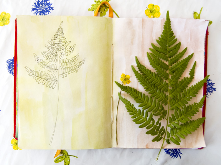 Art by Camilla Lekebjer. Visual journal: Fern and buttercup